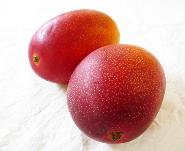 徳之島産 完熟マンゴーの販売を開始しました