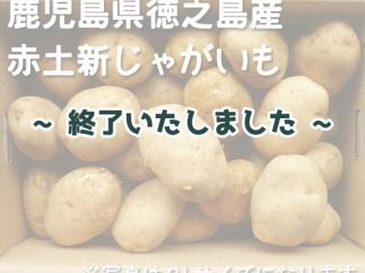 令和2年産 新じゃが「赤土じゃがいも」(鹿児島県徳之島)箱入り【3S~3L 10kg】