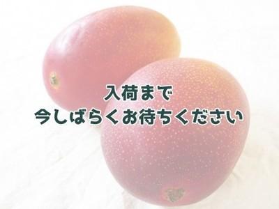 令和2年産「完熟マンゴー」(鹿児島県徳之島)化粧箱入り 約1kg
