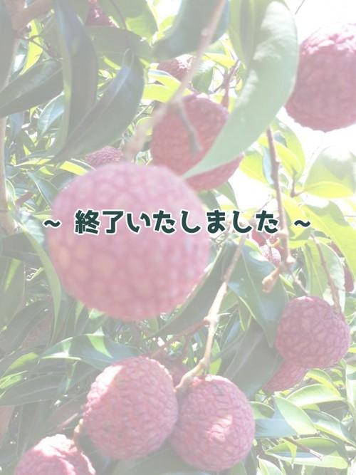 【国産】生ライチ(徳之島産) 約350g