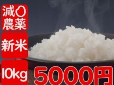令和2年産 伊佐米ヒノヒカリ減農薬米「特別米」風袋込み10kg(内容量9.5kg)送料別途